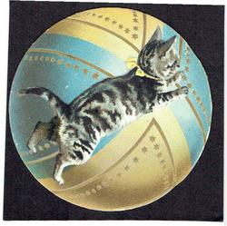 tabby cat leaping towards the right, background image of a circular ball