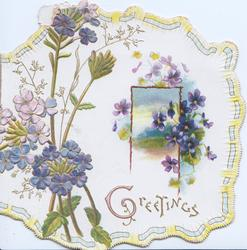 GREETINGS in gilt, blue phlox left, violets around rural inset right, marginal ribbon design. embossed