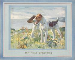 BIRTHDAY GREETINGS in gilt, two fox terriers on grassy bank face left, ocean in background