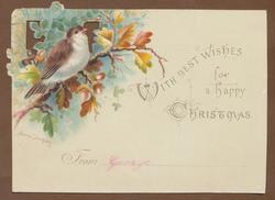 bird on oak branch