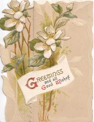 GREETINGS AND ALL GOOD WISHES (G,G,W illuminated) white anemones on  both flaps,  buff background