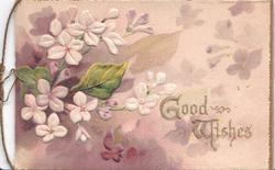 GOOD WISHES(G & W illuminated) in gilt right of white primroses, purple background