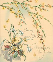 HAPPINESS BE YOURS sprays of yellow jasmine above  TO MY DEAR BROTHER! snowdrops & yellow asters left