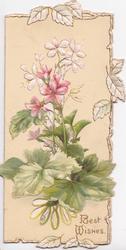 BEST WISHES in gilt below pink & white dianthus, marginal leaf design