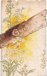 GREETINGS in white on wooden plank, white   dianthus above & below, heavy embossing