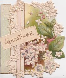 GREETINGS on scroll, white lilac almost surrounds, leaves & brown background below, perforated