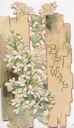 BEST WISHES in gilt on right slat of fence, white lilac grows through, perforated