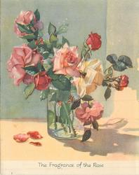 THE FRAGRANCE OF THE ROSE on bottom border, pink, yellow & red roses in clear vase, 3 petals on table
