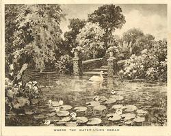 WHERE THE WATER-LILIES DREAM pond with water-lilies & swan, stone pillars, many shrubs & trees