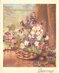 GREETINGS purple & white violets, spotted with pink flowers in woven basket, window & copper curtain behind
