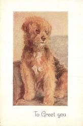 TO GREET YOU slightly shaggy, tan coloured dog sits on sofa, facing front looking slight right