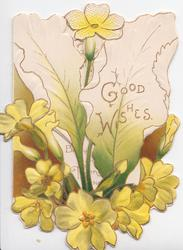 GOOD WISHES in gilt amid yellow primroses on perforated front