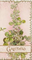 GREETINGS in gilt on white designed plaque across clover leaves & flowers, green marginal design