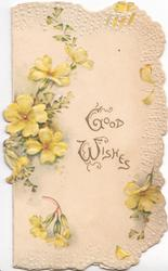 GOOD WISHES in gilt right, yellow primroses around, white marginal design