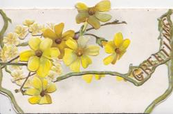 GREETING in perforated gilt right, yellow primroses above left