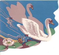 BIRTHDAY JOY 2 swans swim right