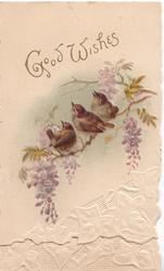 GOOD WISHES in gilt above 3 wrens perched on wisteria. stylised white ivy leaves at base