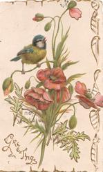 GREETINGS in gilt below left under bluetit perched on red poppies, perforated