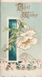 BEST WISHES(B & W illuminated) in gilt above white anemones, appearing to come through window, stylised ivy below, green background