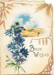 WITH BEST WISHES(B & W illuminated) in gilt right of blue anemones, rural view on inside back partly visible