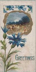 GREETINGS in gilt & blue, gilt bordered rural inset stooked wheat, blue cornflowers above & below