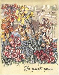 TO GREET YOU below multi-coloured wallflowers, forget-me-nots