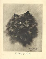 TO BRING YOU LUCK! long haired black cat  looks & faces front, head & neck study