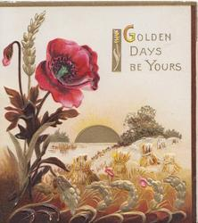 GOLDEN DAYS BE YOURS(G illuminated) on white upper right, pink poppies left, stooked wheat design below, sun rising