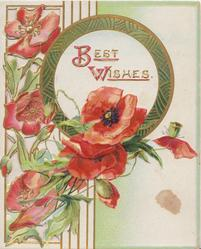 BEST WISHES(B & W illuminated) on gilt bordered white circular plaque, red poppies left,perforated design