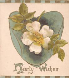 HEARTY WISHES(H & W illuminated) below green heart shaped plaque & white wild roses