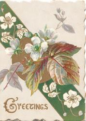 GREETINGS(G illuminated) below white wild roses in front of printed ribbon & gilt design
