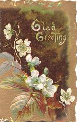 GLAD GREETING in white above white wild roses, various shades of brown as background edit