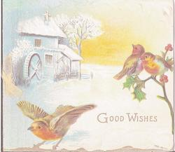 GOOD WISHES three robins, two perched on holly branch, one in flight, cabin in background, snow scene