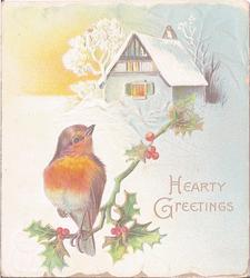 HEARTY GREETINGS robin perched on twig of holly in front of cabin, snow scene