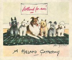 A HIELAND GATHERING row of 6 Scottish dogs sitting on green tartan under sign SCOTLAND FOR EVER!