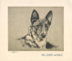 ALL GOOD WISHES head & shoulders sketch of shepherd, yellow/grey background