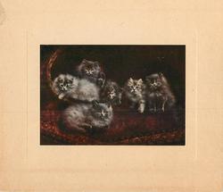A BUNDLE OF MISCHIEF (title inside left) six fluffy grey kittens