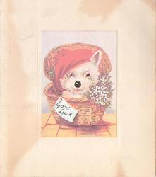 no front title, white dog in woven basket wears red tam, white heather, GOOD LUCK on tag