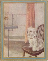no front title, white terrier sits on chair looking at bird in cage