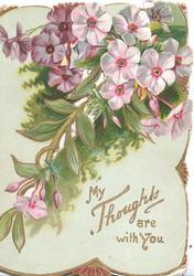 MY THOUGHTS ARE WITH YOU in gilt below pink phlox & fern, perforated
