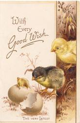WITH EVERY GOOD WISH in gilt, 2 chicks watch another hatch, brown floral design right, THE VERY LATEST below