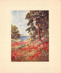 no front title, woodland scene with many red poppies front, arbutus trees mid-distance right, water in distance