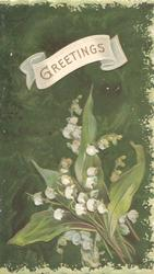 GREETINGS in gilt on white plaque above lilies-of-the-valley, dark green background