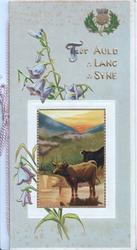 FOR AULD LANG SYNE in gilt above rural inset, cows at waters edge, campanulas around