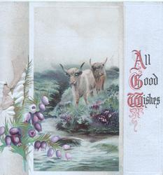 ALL GOOD WISHES(A,G&W illuninated) right, white & purple heather left, highland cattle across stream