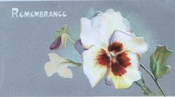 REMEMBRANCE in white above brown & yellow pansies, grey background