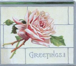 GREETINGS in silver below pink rose, silver margins & design, cream background
