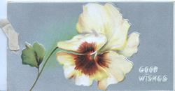 GOOD WISHES in white lower right below yellow & brown pansy, grey background, 3 white margins