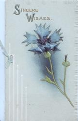 SINCERE WISHES in gilt above single blue cornflower