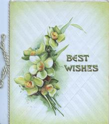 BEST WISHES in gilt  right on pale green hatched design, 5 narcissi left